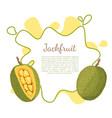 jackfruit exotic juicy stone fruit isolated vector image vector image