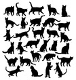 Cat Pet Animals vector image vector image