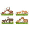 four types animals in garden vector image vector image