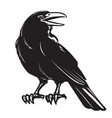 graphic black crow isolated on white background vector image vector image