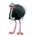 Happy Cartoon Ostrich vector image vector image