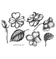 collection hand drawn black and white vector image