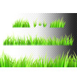 grass isolated on white black and vector image
