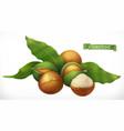 macadamia 3d realistic icon vector image