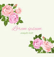 pink and beige roses on the light green vector image