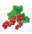 red currant bush with green leaves isolated vector image vector image