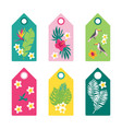 tropical set summer tags vector image vector image