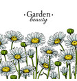 daisy flower border drawing hand drawn vector image