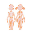 flat structure human body anatomy skeleton vector image vector image