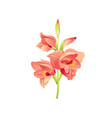 gladiolus flower floral icon realistic cartoon vector image vector image