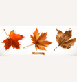 maple leaf 3d realistic icons vector image