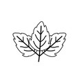 sketch contour of wavy three leaves plant vector image vector image