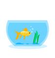 goldfish in the aquarium vector image