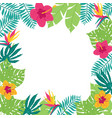 hand drawn tropic frame vector image vector image