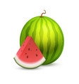 whole beautiful watermelon with a slice section of vector image
