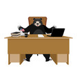 baribal american black bear sitting in office vector image