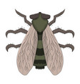 big fly the tabanus drawing vector image vector image
