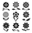 Dahlia aster daisy chamomile gowan anemone vector image vector image