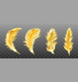 golden yellow fluffy feather realistic vector image