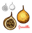 grenadilla exotic sketch fruit icon vector image vector image