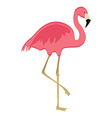 Pink flaming bird vector image vector image