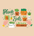 plants sale special offer vector image vector image