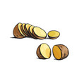 sketch ripe raw unpeeled sliced potato vector image vector image