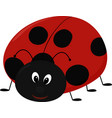 cartoon lady bug vector image