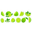 cartoon lime limes slices green citrus fruit vector image vector image