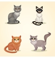 Cat set isolated vector image