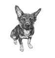 drawing of black dog sitting on white background vector image