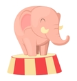 Circus elephant icon cartoon style vector image