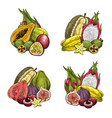 exotic fresh tropical fruits vector image vector image