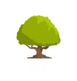 oak tree icon flat style vector image