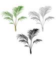 palm decoration house plant tropical plant vector image
