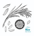 rice hand drawn vector image vector image