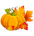 Autumn Pumpkin vector image