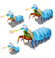 growth stage mantis lobster or oratosquilla vector image vector image