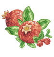 pomegranate fruit branch in graphic vector image