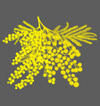 hand-drawn branch of mimosa yellow silhouette on vector image