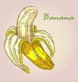 highly detailed hand drawn banana fruit vector image