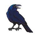 black crow vector image
