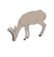 gazelle drawing color vector image vector image