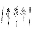 grasses silhouettes on white vector image