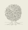 oak tree contour hand drawn vector image vector image