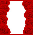 red rose border vector image vector image