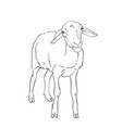 sheep drawing farm animal stands on its vector image