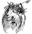 art scottish shepherd vector image