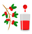 berry juice red cowberry lingonberry cranberry in vector image vector image