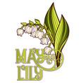 may lily vector image